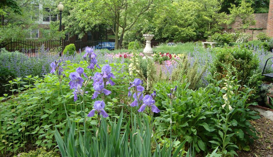 Dumbarton-House-Herb-Garden